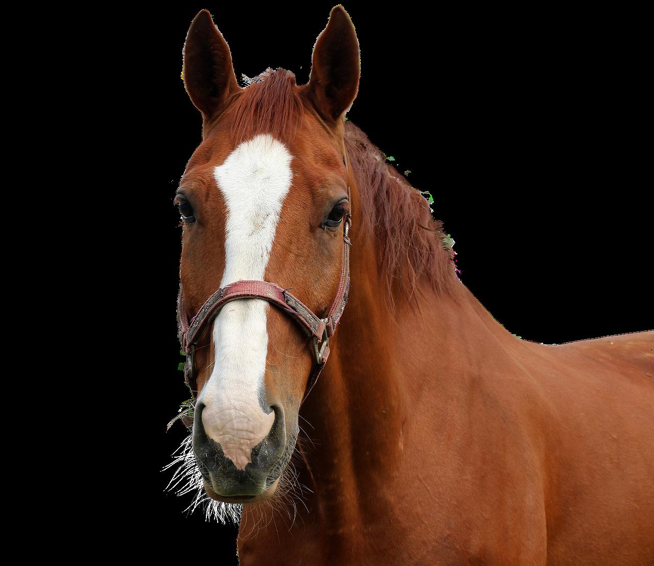 horse-3761496_1280